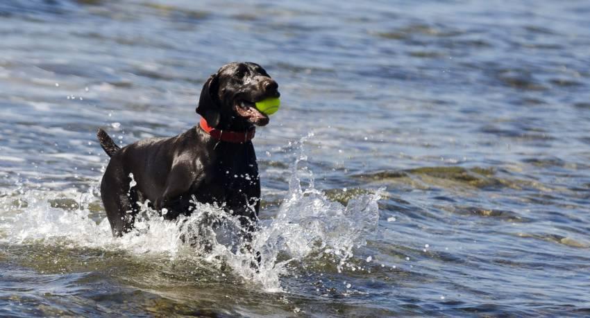 dog beaches in maremma