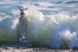 dog jumping in the sea